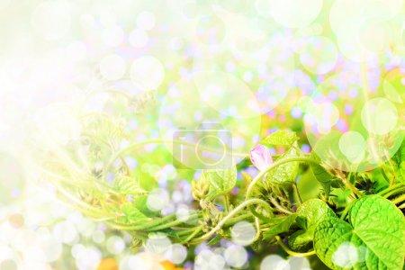 Foto de Hierba verde fresca y hojas. Fondos de primavera.Fondo bokeh verde - Imagen libre de derechos