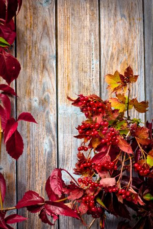 Vintage Autumn border from ashberry and and fallen leaves on old wooden table.