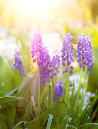 Photo for Spring flowers, Nice background with beautiful flowers - Royalty Free Image
