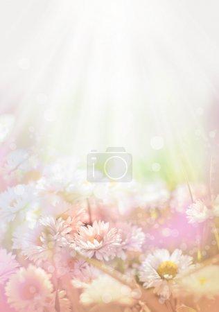 Photo pour Printemps fond floral - image libre de droit