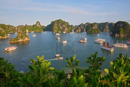 Photo for Tourist Junks in Halong Bay from titop island, Vietnam - Royalty Free Image