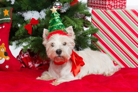 Westie with new year tree