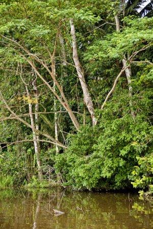 Photo pour Une vue sur la forêt de la province de Tambopata par une journée ensoleillée . - image libre de droit