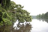 River at Tambopata Province