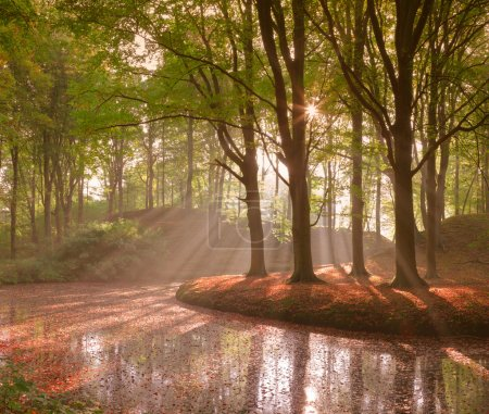 Forest in autumn with pond and mist with sunrays.