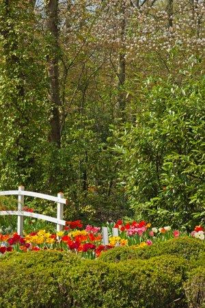Photo pour Jardin fleuri avec pont blanc au printemps. Keukenhof. Lisse. Pays-Bas . - image libre de droit