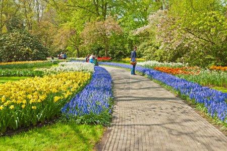Photo pour Touristes dans le jardin de tulipes au printemps. Keukenhof. Lisse. Pays-Bas . - image libre de droit