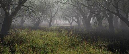 Photo pour Forêt brumeuse avec herbe. Plan panoramique . - image libre de droit