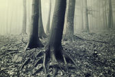 Tree trunks and roots in a misty forest
