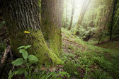 Green moss on roots of trees in forest