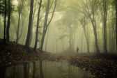 Lake in a spooky forest with fog and man