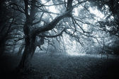 Dark creepy scene in a forest with fog and scary tree on halloween
