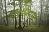 Green tree in a green forest with fog after rain