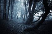 Man in dark forest with fog on halloween
