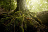 Roots of tree with green moss in green forest