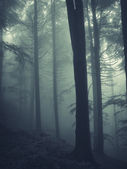 Vertical photo of trees in dark forest with fog