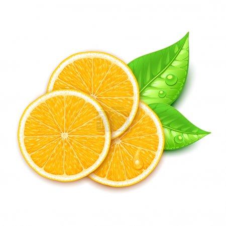 Illustration for Orange slice - Royalty Free Image