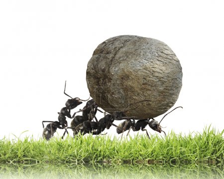 Photo for Teamwork ,team of ants rolls stone uphill - Royalty Free Image
