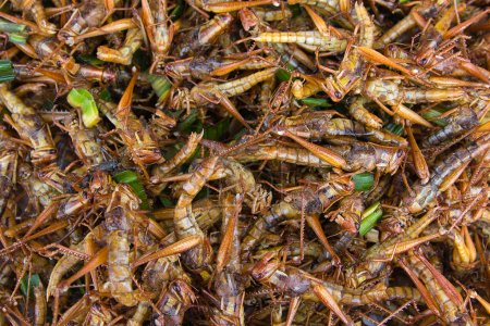 Photo for Fried grasshoppers - a snack often used in Asia - Royalty Free Image