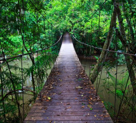 Photo for Suspension bridge across the water in the forest - Royalty Free Image