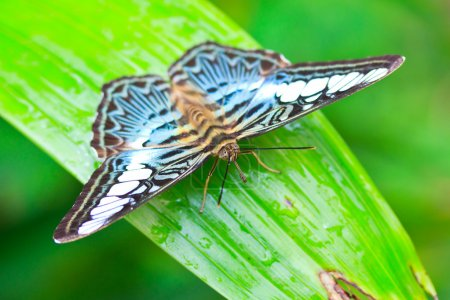 Butterfly in pang sida national park
