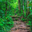 Tropical trail in dense rainforest self-guided tra...