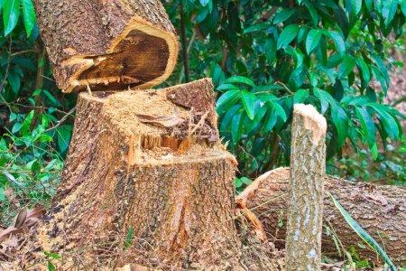 Forest deforestation