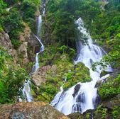 Vodopád v lese