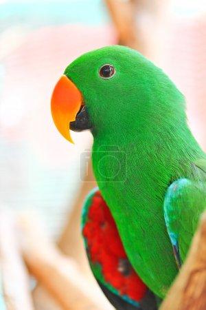 Nice parrot