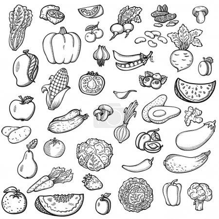Illustration pour Ensemble de légumes et de fruits. Pour le menu. Un dessin à la main, rétro. Une nourriture saine. Style vintage . - image libre de droit