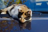 A cat sits on top of a car.