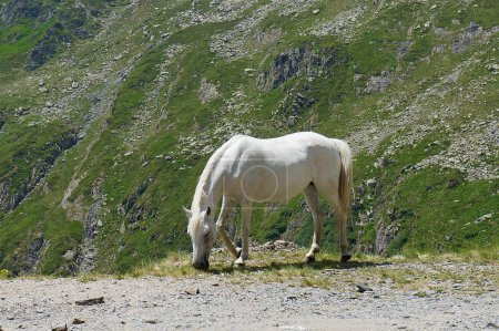 Mountain scenery with a white horse and a green ba...