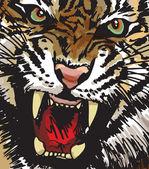 Sketch of white tiger Vector illustration