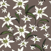 Elegance Seamless background with edelweiss flowers