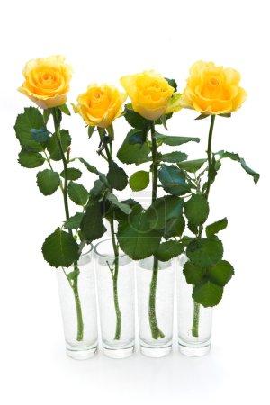 Photo pour Quatre roses jaunes dans des petits vases sur blanc - image libre de droit