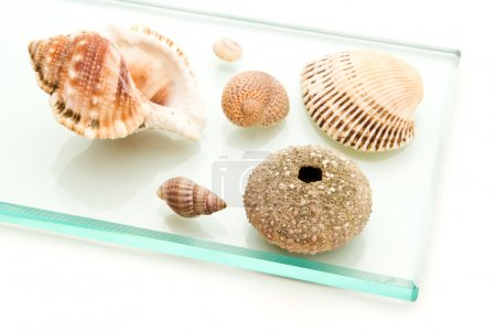 sea shells on glass