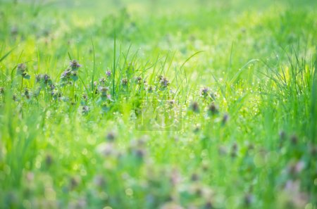 Photo for Drops of dew on grass and flowers with shallow depth of field - Royalty Free Image