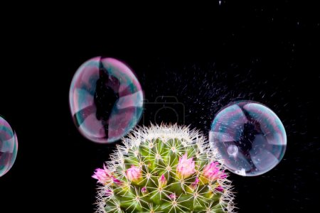 soap bubble bursting