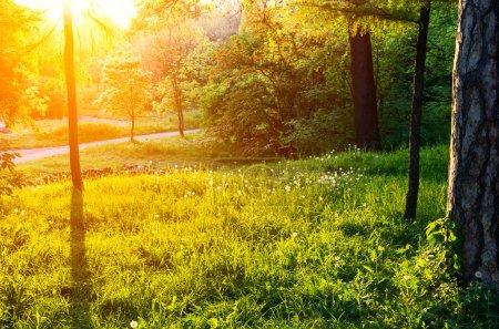 lumière du soleil dans le parc