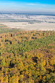 Aerial view of forest landscape in Poland