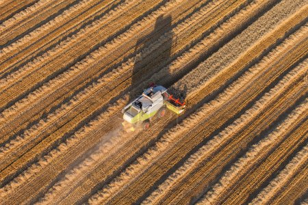 Photo for Aerial view of combine on harvest field - Royalty Free Image