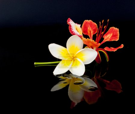 Flowers on a Black Background