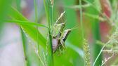Páření hmyzu