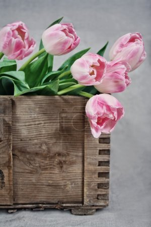 Pink tulips in a wooden box