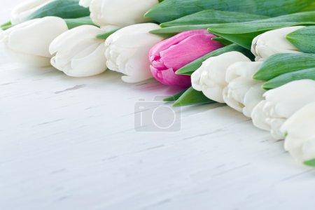 Photo pour Tulipe rose parmi les tulipes blanches sur table rustique en bois blanc - Concept unique - image libre de droit