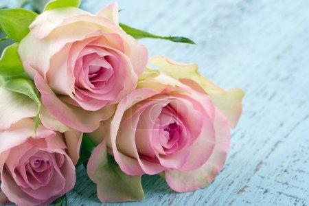 Pink roses on light blue wooden background