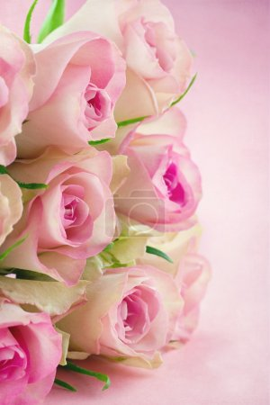 Roses on pink textured background
