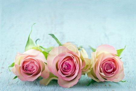Photo pour Trois roses roses à la lumière bleue en bois fond chic minable avec espace copie - image libre de droit