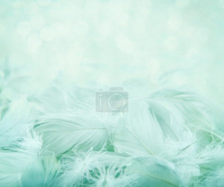 Fluffy feathers on turquoise blurry background