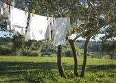 T-Shirts und andere Wäsche auf einer Wäscheleine trocknen